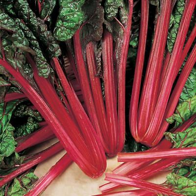 Swiss Chard Rhubarb Beta vulgaris - Appx 500 Seeds