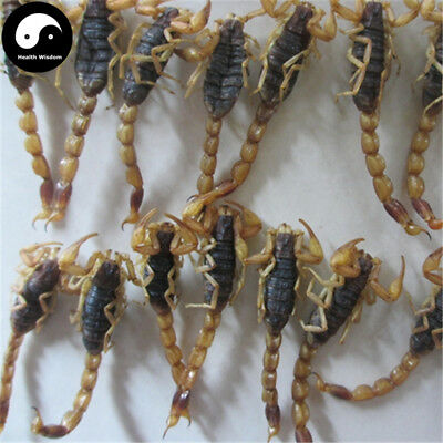 WU GONG 蜈蚣, Dried Centipedes, Scolopendra Subspinipes
