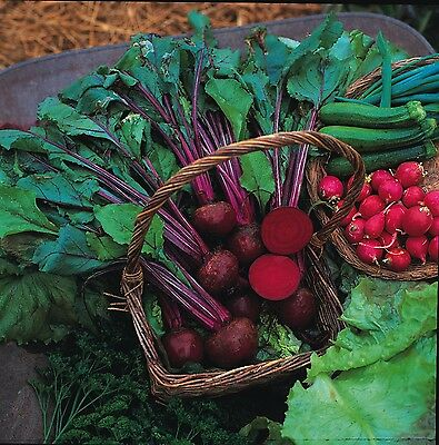 12 Pack Vegetable Seed  include Bean Cabbage Carrot Lettuce Leek Onion Tomato