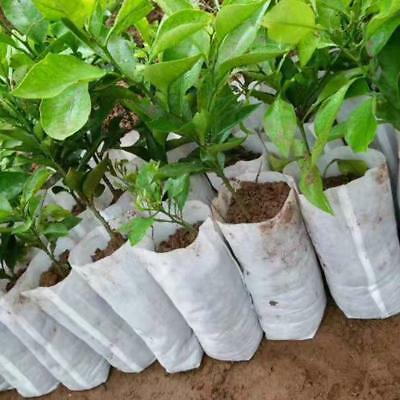100x 20*22cm Garden Nursery Germinate Grow Seed Seeding Pot Bag Non-woven Fabric