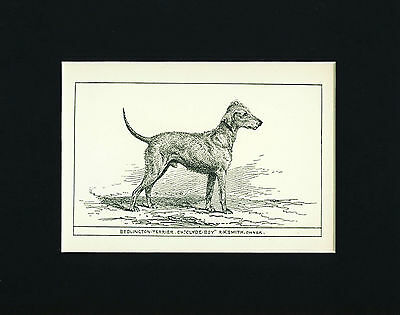 Dog Art Print 1900 Bedlington Terrier Dog ANTIQUE