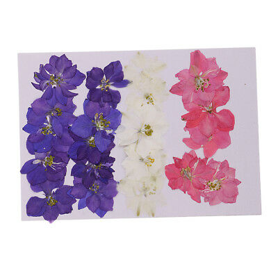 20x Real Natural Dried Flowers Delphinium for DIY Handmade Specimen Craft