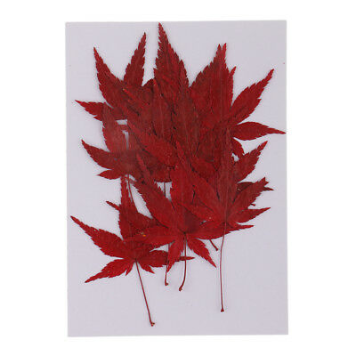 12pcs Pressed Real Dried Flower Maple Leaf for DIY Soap Candle Making Decor