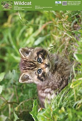 A2 Scottish Wildcat Poster/  . Educational