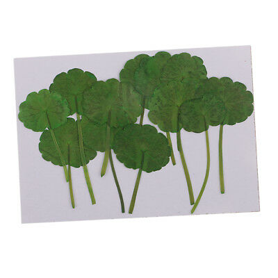 12pcs Real Pressed Green Leaves Dried DIY Phone Case Decoration Card Making
