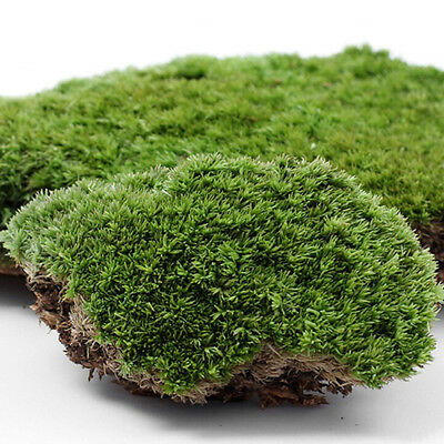Artificial Green Grass Moss Plant Ornament Miniature Home Party Decor Novelty