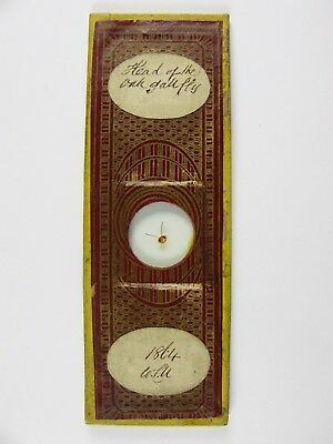 Antique Microscope Slide by W.C.U.? Head of the Oak Gall Fly. Dated 1864.