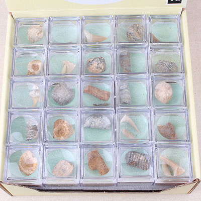 1Box Vintage Collection Organic Mixed Coral Ocean Fossils Minerals Rare Specimen