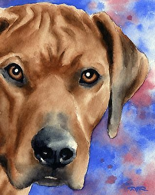 RHODESIAN RIDGEBACK Dog Watercolor 8 x 10 ART Print Signed by Artist DJR