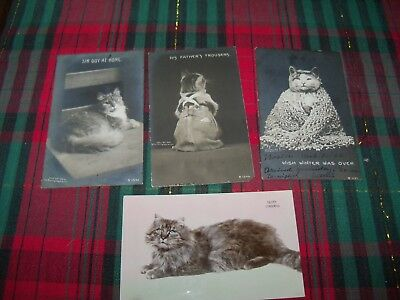 Rotograph Kitty Cats - c1905 Real Photo Postcards Kittens davidson's