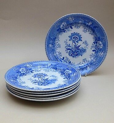 Set of 6 ~ mid 19thC Blue & White Plates ~ Botanical Beauties / Antique English