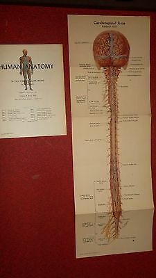 HUMAN ANATOMY Booklet  -  Color Plates HAMMOND New Jersey - MERCK Chart