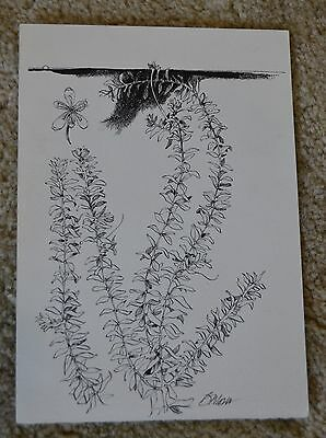 Barry Moser Drawing Pen And Ink Original Botanical Signed