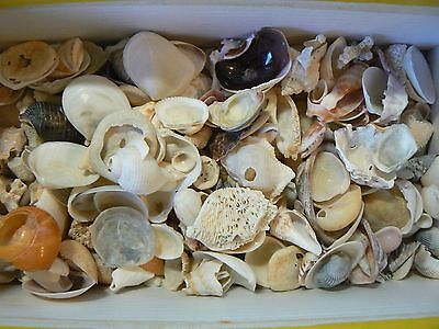 SHELLS MIX small assorted 200 gr for craft, wedding,home, aquarium decoration.