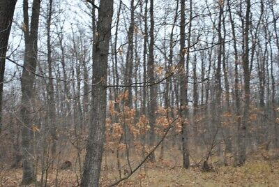 Freehold woodland for sale in Bulgaria Bulgarian forest trees property 4 house