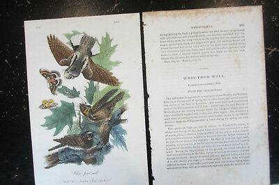 WHIP-POOR-WILL - AUDUBON BIRDS OF AMERICA , CA: 1840s HAND COLORED