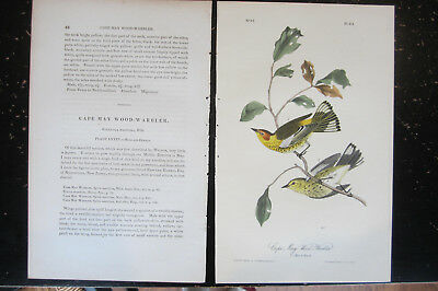 CAPE MAY WOOD WARBLER - AUDUBON BIRDS OF AMERICA , CA: 1840s HAND COLORED