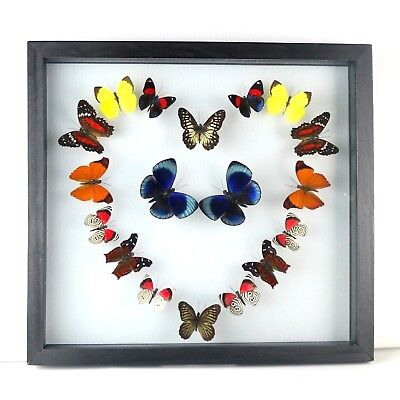 "18 real butterfly taxidermy collection in 10.5"" x 11.5"" frame, pretty heart gift"