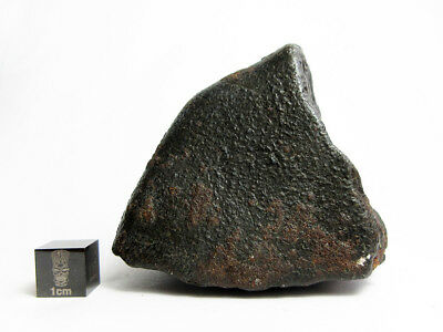 NWA x  Meteorite 280.38g  Colossal Chondrite with Character
