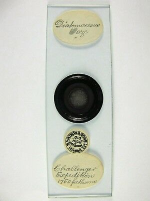 "Antique Microscope Slide by Watson. ""Challenger Expedition"". Diatomaceous Ooze."