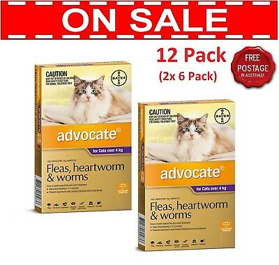 ADVOCATE PURPLE Pack for Cats Over 4 Kg 12 Pipettes (2 x 6 Packs)
