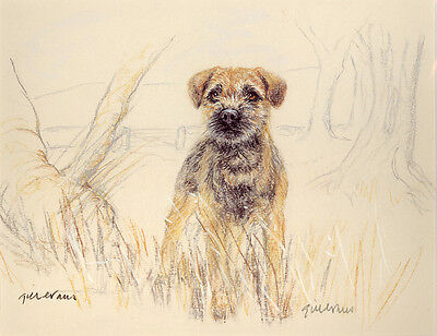 BORDER TERRIER DOG LIMITED EDITION PRINT - Signed Artist Proof - Numbered 34/85
