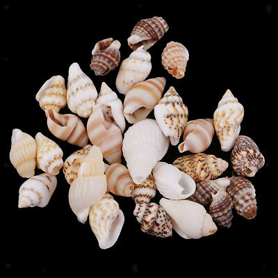 30 Mixed Natural Conch Shells Seashells DIY Jewelry Craft Decoration Accents