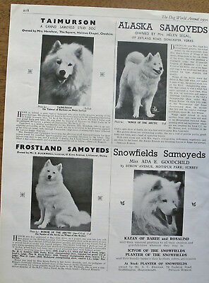 SAMOYED DOG  BREED KENNEL CLIPPINGS 1940s- 2000s x 40