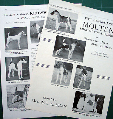SMOOTH FOX TERRIER KENNEL CLIPPINGS 1940s x 40