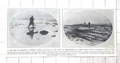1912 Storms Reveal Primeval Forest , Freshwater West, Pembrokeshire