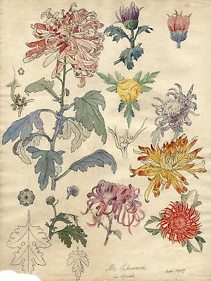 Art Nouveau Flowers Original Watercolor drawing Plante Grasset Style 1909