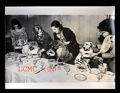 Fotografia Press Photo Londra 1970 Cani Serviti A Tavola...strange Photo...