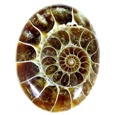 42.60Cts 100% Natural Designer Ammonite Fossil Oval Cabochon Loose Gemstone