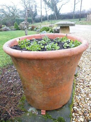 Very Large Substantial Heavy Old Vintage Patinated Terracotta Plant Pot
