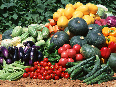 50 Variety Seed Medley For Garden Or Doomsday Storage 12,000+ Seeds Non Gmo