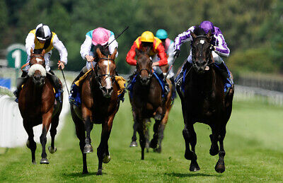 Horse Racing System  For Under 1/2 For National Hunt Racing