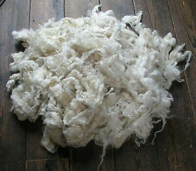 Curly sheep Fleece Rare Pedigree Leicester Longwool 1KG just sheared & washed