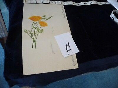 #927H antique Hand painted  water colour  Signed  # ?   FLOWERS  watercolor
