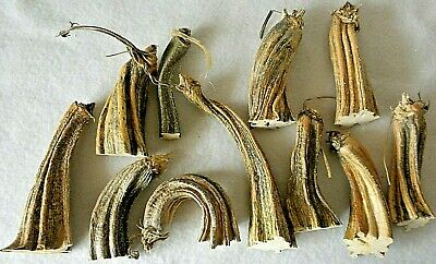 "11 Dried Pumpkin Stem 3-1/2"" - 6"" Heat Treated, Clean, Ready to Use Lot P 6"