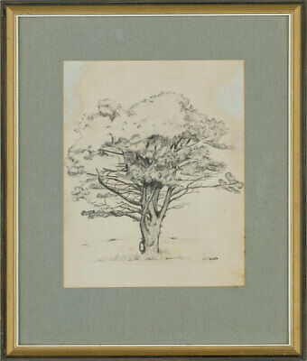 Early 20th Century Pen and Ink Drawing - Study of a Tree