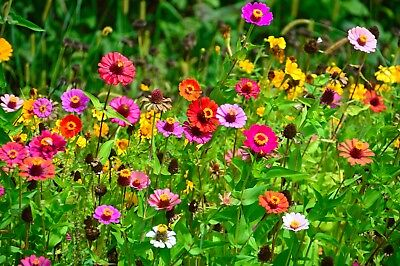 Serendipity's Butterfly Garden Wildflower seed Mix Lots of Color! Bulk Seeds
