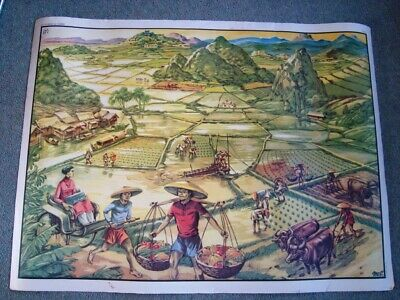 Vintage French Double Sided Educational School Poster MDI  PADDY FIELDS RAIN FO