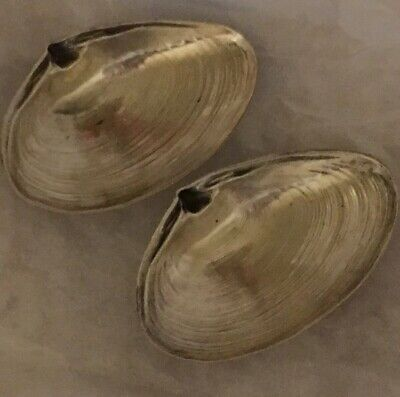 """PAIR Sterling Silver WALLACE 3 1/2"""" footed Clam Shell Dishes seashell 4020"""
