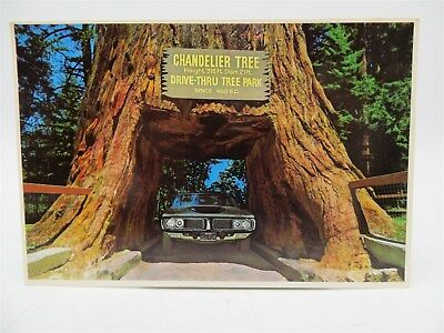Vintage Postcard - Chandelier Tree Drive-thru Redwood Tree Leggett CA - Unused