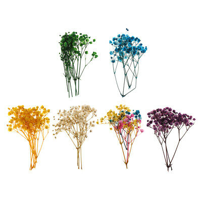 1 Bag Pressed Leaves Natural Dried Flowers for DIY Scrapbooking Cards making