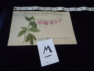 #927M antique Hand painted  water colour  Signed  # ?  1910  FLOWERS  watercolor