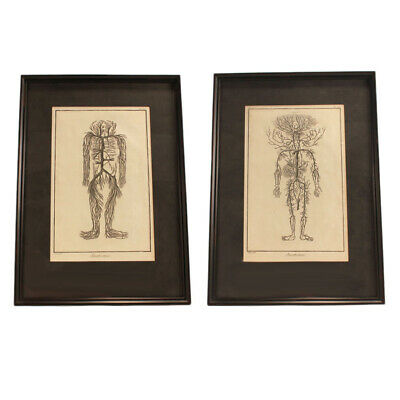 Antique French Anatomical 18th Century Engravings - Framed - Medical Oddity