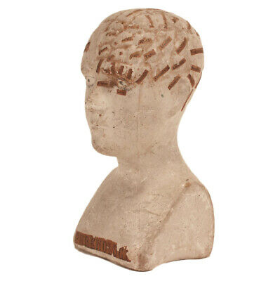 Antique Phrenology Bust c. 1850s - Chalkware & Applied Paper - Medical Oddity