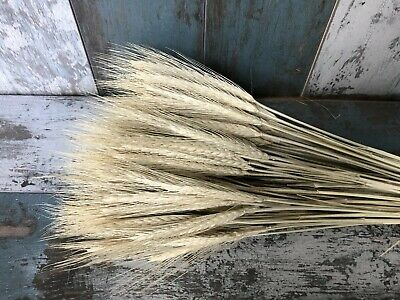 100 Stems Dried Wheat-Rye Flowers Arrangement Natural Straw Colour Bouquet 20""