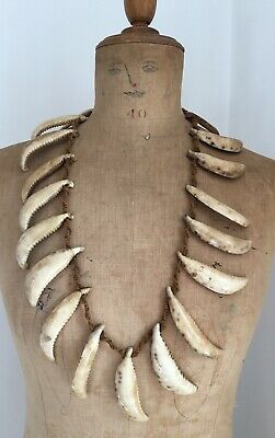 Old Antique Oceanic Large Cut Cowry Shell Imitating Shark Teeth Necklace